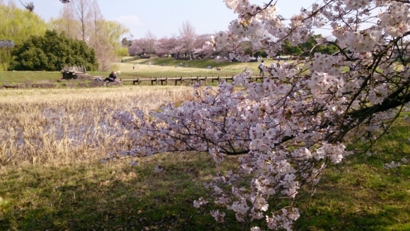 いよいよ、桜花舞台。_d0116059_07474282.jpg