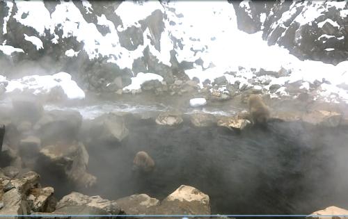 地獄谷の温泉に入る猿  その3 _d0096268_22220214.jpg
