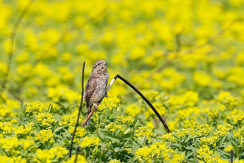 この日は5時起きで鳥撮りに出かけました。_f0368272_21271065.jpg