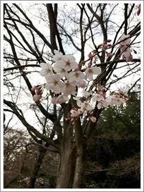 水源公園の桜_b0142989_17225640.jpg