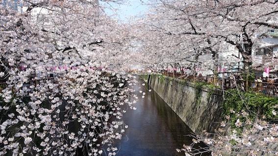 今日の目黒川(4/4水)_f0230689_11564211.jpg
