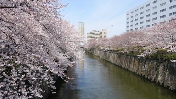今日の目黒川(4/4水)_f0230689_11570201.jpg