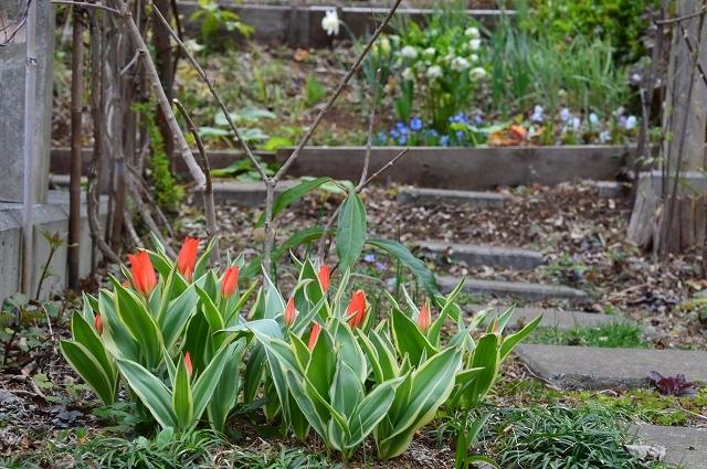 清明…4月4・6日の庭。_c0124100_21452540.jpg
