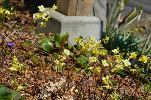 清明…4月4・6日の庭。_c0124100_21455432.jpg