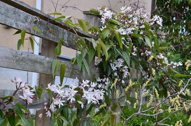 清明…4月4・6日の庭。_c0124100_21473894.jpg