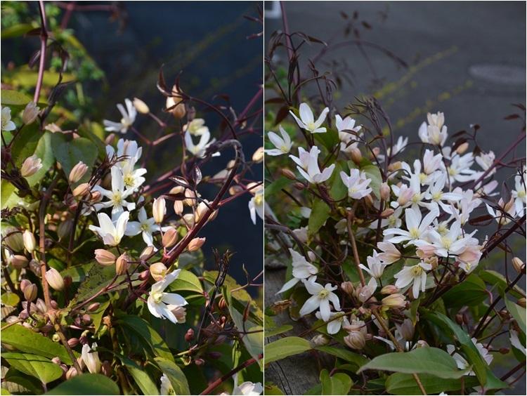 清明…4月4・6日の庭。_c0124100_21474169.jpg