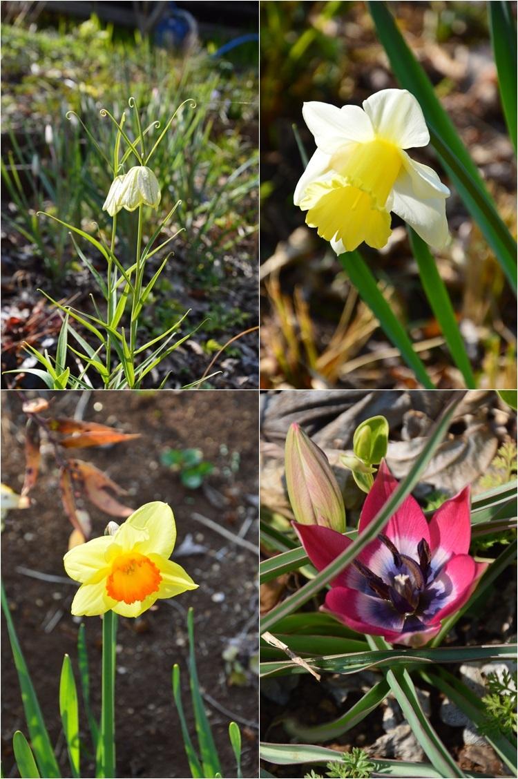 清明…4月4・6日の庭。_c0124100_21474960.jpg