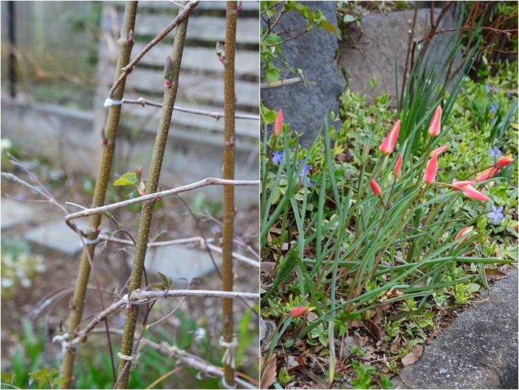 清明…4月4・6日の庭。_c0124100_21513170.jpg
