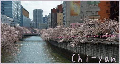 桜前線(自然教育園 → 目黒川)_e0219011_19053422.jpg