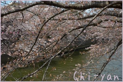 桜前線(自然教育園 → 目黒川)_e0219011_19061377.jpg