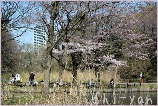 桜前線(自然教育園 → 目黒川)_e0219011_19084821.jpg