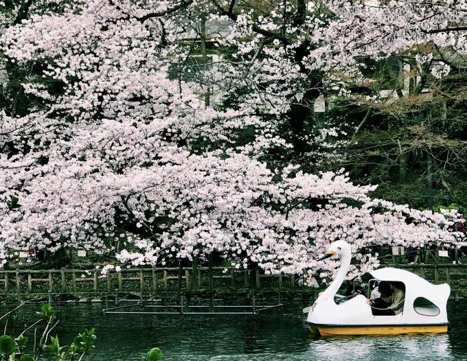 【キナさんぽ】春爛漫。_f0115311_23255667.jpg