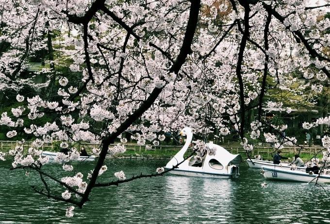 【キナさんぽ】春爛漫。_f0115311_23280638.jpg