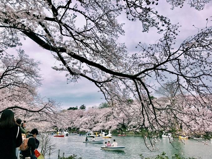 【キナさんぽ】春爛漫。_f0115311_23331812.jpg
