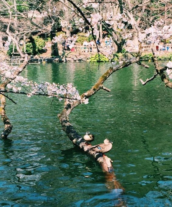 【キナさんぽ】春爛漫。_f0115311_23373638.jpg