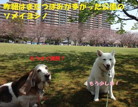 f0121712_15083351.jpg