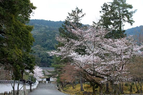 南禅寺 桜スタート_e0048413_20101604.jpg
