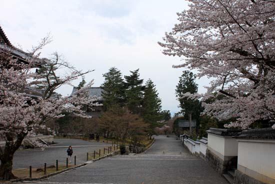 南禅寺 桜スタート_e0048413_20102047.jpg