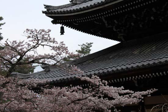 南禅寺 桜スタート_e0048413_20102845.jpg