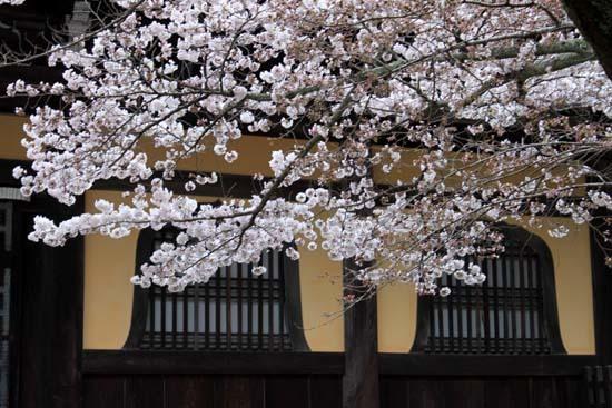 南禅寺 桜スタート_e0048413_20103383.jpg