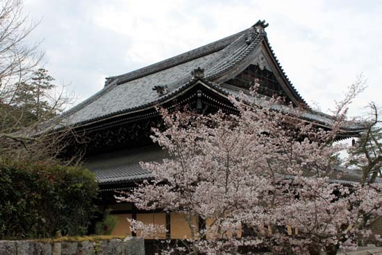 南禅寺 桜スタート_e0048413_20103763.jpg