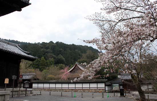 南禅寺 桜スタート_e0048413_20105169.jpg