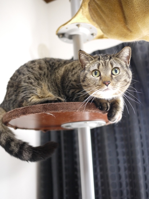 猫のお留守番 さくらちゃん編。_a0143140_21171181.jpg