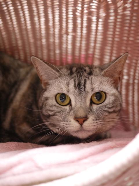 猫のお留守番 アイリスちゃん編。_a0143140_2122407.jpg