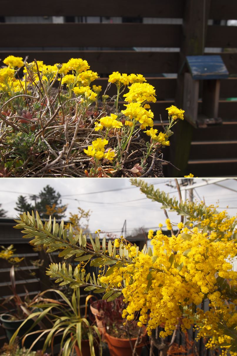 デッキ☆今年の春はイエローがいっぱい_c0152341_14173398.jpg