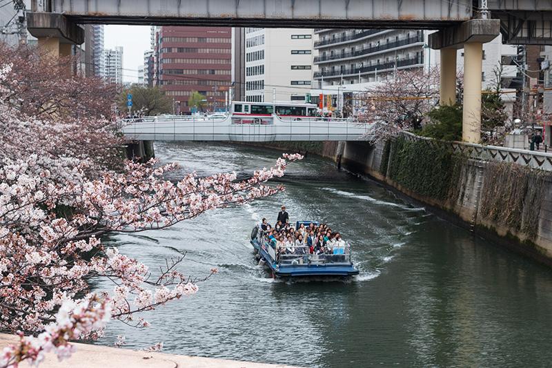 五反田の桜と進世堂_a0003650_23153247.jpg