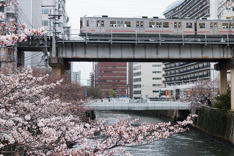 五反田の桜と進世堂_a0003650_23171398.jpg