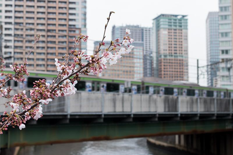 五反田の桜と進世堂_a0003650_23174763.jpg