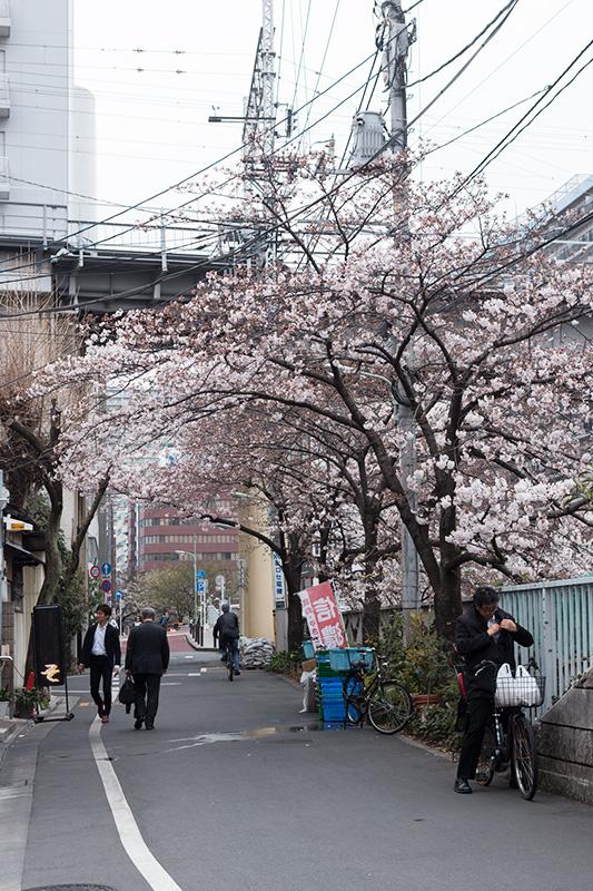 五反田の桜と進世堂_a0003650_23182065.jpg
