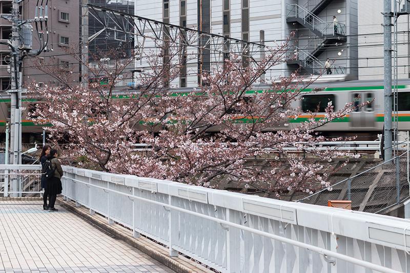五反田の桜と進世堂_a0003650_2318716.jpg
