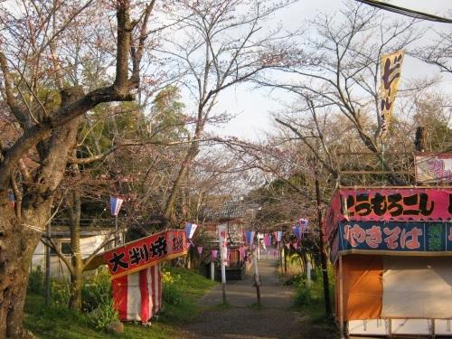 4/6 鶴舞公園の開花状況_c0363752_11420655.jpg