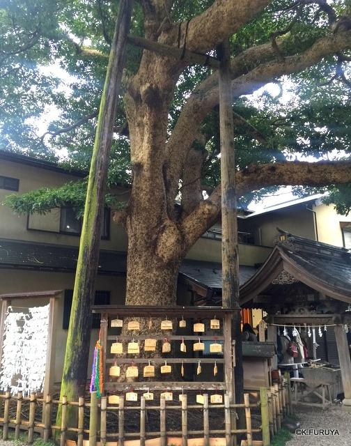 ☂ 雨の鎌倉散策 ☂  成就院と御霊神社_a0092659_19504395.jpg