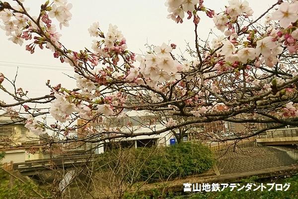 開花宣言!_a0243562_14430354.jpg