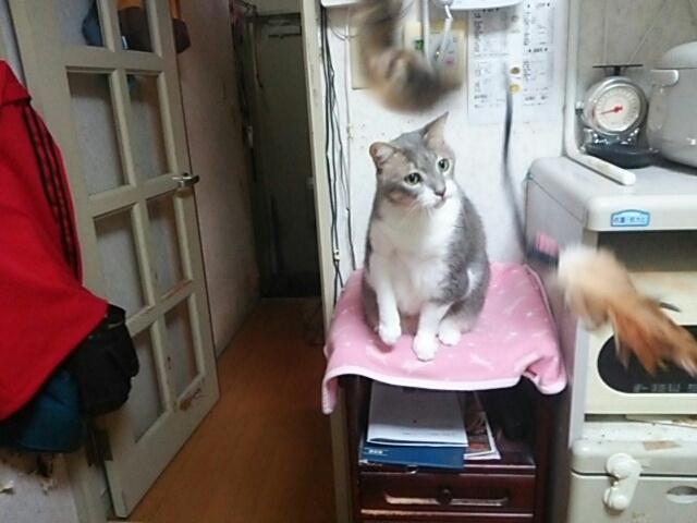 猫じゃらし_b0112380_23270904.jpg