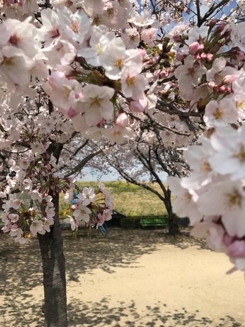 """足利市 I邸に向かう途中! \""""さくらの花と菜の花""""のコントラストがとてもキレイでした。_e0361918_17063232.jpg"""