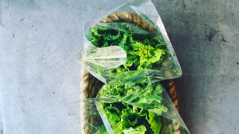 第3734回 野菜とYARMO。_f0366424_16171143.jpg