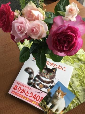 やっぱり猫が好き_c0006826_15323990.jpg