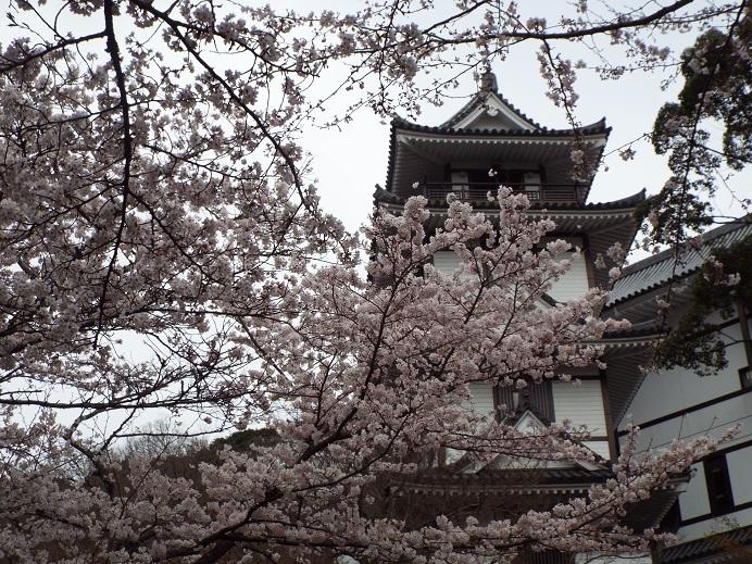 桜巡り・・虎尾桜、添田公園_e0164643_10591743.jpg