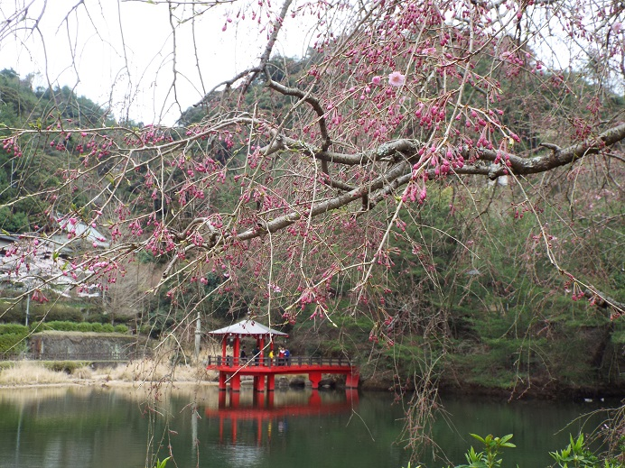 桜巡り・・虎尾桜、添田公園_e0164643_1104915.jpg