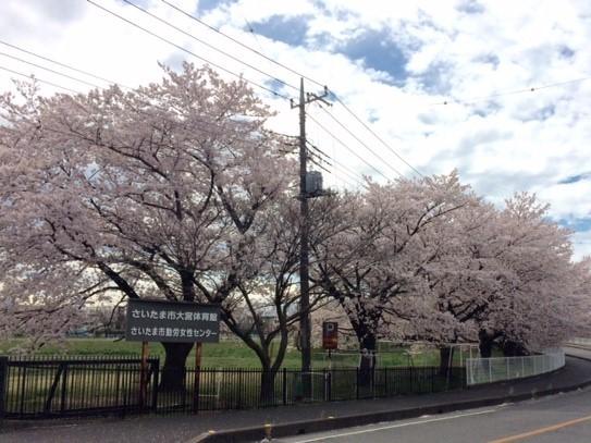 春です_a0078344_18111695.jpg