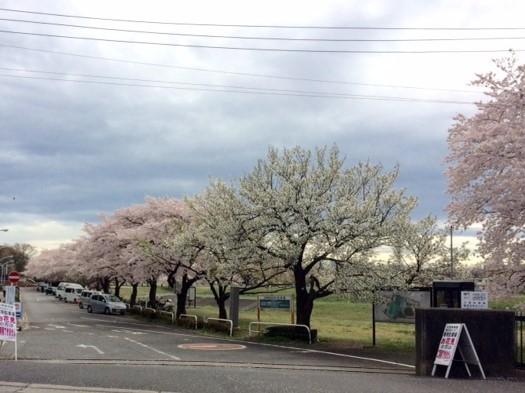 春です_a0078344_18112675.jpg