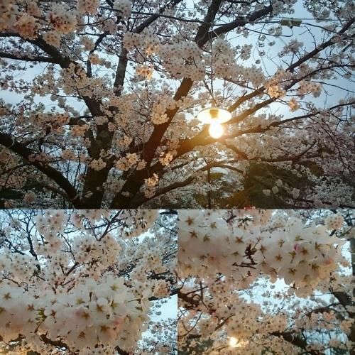 桜を見に京都へ♪_f0236260_00002766.jpg