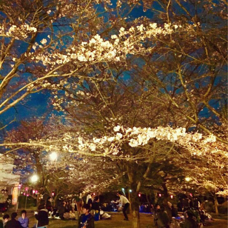 5月のライブと夜桜と_a0127284_13212284.jpg