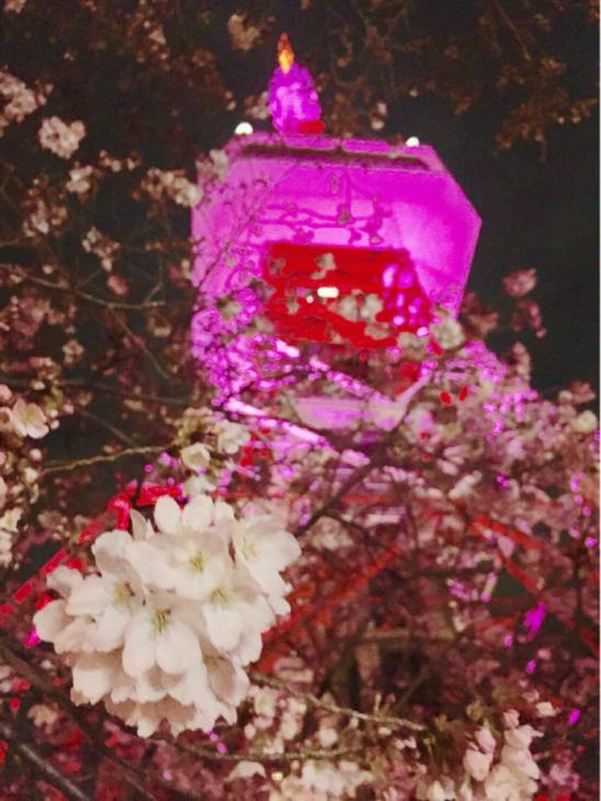 5月のライブと夜桜と_a0127284_13212374.jpg