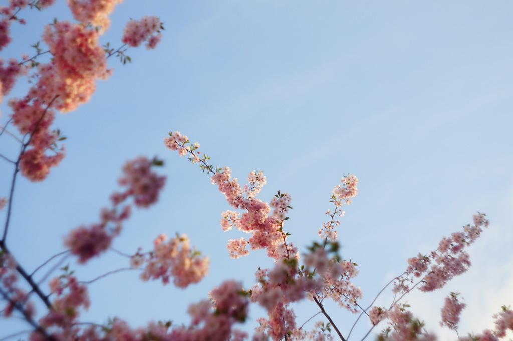桜並木三日目だった日曜日。_c0180686_22580347.jpg