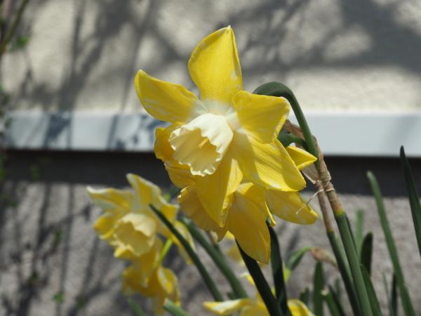 春に咲く球根 来年の花のために_e0232798_14213116.jpg